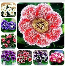 22 Colors Gloxinia Seeds Perennial Bonsai Balcony Flower - 100 Pcs Garden