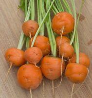 Runde Möhre - Karotte - Parisian Market 100+ Samen - Saatgut