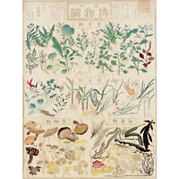Kato Chikusai Species of Flora Fauna Mushrooms Japanese Large Wall Art Print 18X