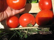 15 graines semences Tomates POMME ROUGE trés productive  SEEDS de FRANCE