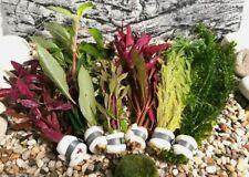 Aquariumpflanzen Set aus verschiedenen Sorten. Lebende Wasserpflanzen