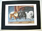 Dog Art Print 1919 Antique Print from Original Paintings - Pomeranian / Terrier