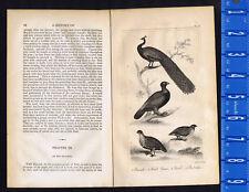 Peacock, Wood Grous, Quail & Partridge - 1830 Goldsmith Copper Engraving