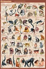 Primates Mammals Educational Science Teacher Classroom Chart Poster 24x36