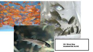 30+ Mixed Fish Bag GUARANTEE ALIVE (FREE 2-Day Shipping)