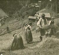 Ötztal - Heuernte - Tirol - Österreich     um 1910   X 49-3