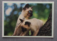 CHATS SIAMOIS PHOTO DUSSAUSAYE MAURICE     postcard