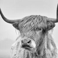 5D DIY Cross Stitch Highland Cow Full Drill Diamond Embroidery Painting Decor QL