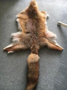 Fuchsfell gegerbt aus eigenem Revier