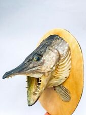 Vintage Real Hand Made Stuffed Fish Pike Taxidermy Home Decor Wall Mount