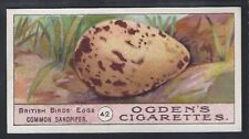 OGDENS-BIRDS EGGS 1908-#42- COMMON SANDPIPER - QUAILTY CARD!!!