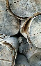 Seasoned logs, firewood for sale softwood hardwood Essex