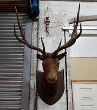 huge taxidermy American Elk wapiti stag mount antlers shop bar retail display
