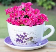 Ceramic Tea Cup and Saucer Planter, Garden, Home (Lavender Flowers) Oversized