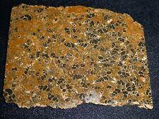 Turritella Agate slab- 6