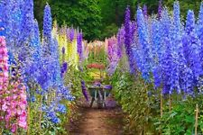 Delphinium Mix Seeds Flowers Fragrant Beautiful For Garden 30 Pcs