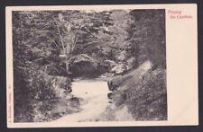 Malaya Malaysia 1900? Kaulfuss&Co Real Photo Postcard Penang Garden Scenery