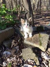 HELP RESCUED KITTENS FAMILY FERAL CAT RESCUE FOOD VET TNR Rec COLOR PHOTO