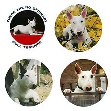 Bull Terrier Magnets: 4 Cool Bullies for your Fridge or Collection-A Great Gift