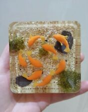 "Resin Mold Square 3"" 75mm Embeding Castin' Craft MC-6 Base Paperweight"