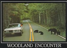 "*Postcard-""Family of Bears"" -Woodland Encounter- /Along Highway/ (U2-408)"