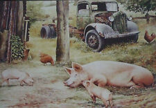 """Pigs and old lorry on Farm greeting card-""""Sitting Tenants"""""""