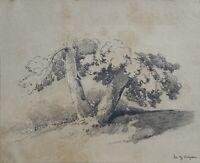 Jules Coignet (1798 - 1860) - Baumstämme - Bleistiftzeichnung - Signiert