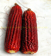 10PCs Seeds Strawberry Corn Rare Vegetables Garden Decoration Plants Home Garden