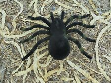 "5"" x 3.5"" Fuzzy Spider Tarantula Fake Prank Black Tan Halloween Prop Flocked New"