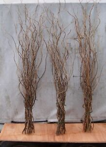 Dried Twisted Willow Twigs