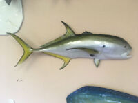 "37"" Jack Crevalle Half Mount Replica - 20 Business Day Production Time"