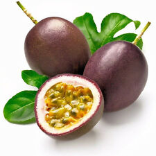 10pcs Tropical Exotic Passion Purple Passiflora Edulis Germination Fruit Seeds