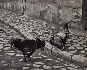 1920/72 Vintage COCK FIGHT Rooster Chickens Budapest Hungary 11x14 ANDRE KERTESZ