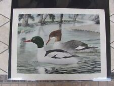 Original 1930  Rex Brasher #129 Hand Colored Bird Print  Merganser #129REX2a DSS
