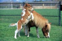 DIATOMACEOUS EARTH 1.6kg Horse & Pony Field Stable MITE KILLER Treatment Shield
