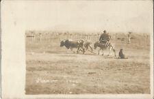 Piravo, Mazedonien, Mann mit Hund und Ochsen reitet auf Esel, Landwirtschaft