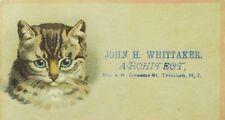 1870's John H. Whittaker Architect Adorable Tabby Cat Blue Eyes P82