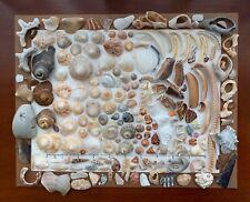190+Pc Natural Beach Seashells Florida Surf Tumbled Shells frag Art Craft pebble