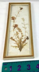 Vintage Germany Dried/Pressed Flowers in gold trim white frame
