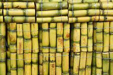 200pcs Sugar Cane Seeds Seed Rum Syrup Rock Candy Sugar Crystals