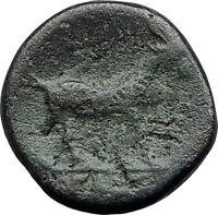 AIGAI in AEOLIS 2-1stCenBC Authentic Ancient Greek Coin APOLLO & GOAT i63150