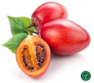20 seeds of Tamarillo - SOLANUM BETACEUM - Tomato Tree + 5 seeds Sunflower