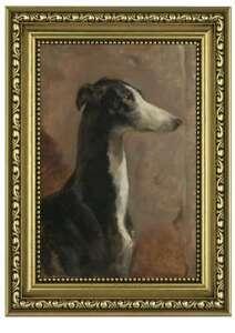 Framed print, portrait of a greyhound, canine art