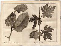 1748 Pluche Antique Engraving: Hazel & Acer Tree Foliage, Botanical Print Decor