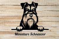 V01 Zwerg Dog Window Sign Decal Gift Pet MINIATURE SCHNAUZER Car Sticker