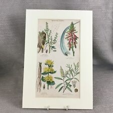 1858 Antique Botanical Print Aloe Plants Rhubarb Fruit Original HAND COLOURED
