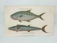 Original 1803 Shaw Hand Colored Copperplate Engraving Fish - Mackerel