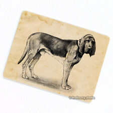 Bloodhound Deco Magnet, Decorative Fridge Dog Animal Pet Antique Illustration