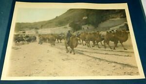 1924 Kalgan Pass Mongolian Camel Train Mongolia Hand Colored Photo