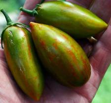 Lucky Tiger Heirloom Tomato - 10 Seeds!